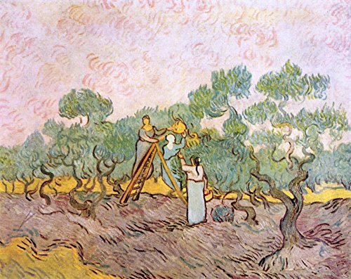 Das Museum Outlet-Olive Pickers by Van Gogh-Poster Print Online kaufen (76,2x 101,6cm) Modigliani Olive