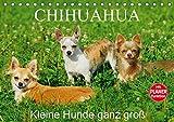 Chihuahua - Kleine Hunde ganz groß (Tischkalender 2019 DIN A5 quer): Die kleinste Hunderasse der Welt auf 13 faszinierenden Fotos (Geburtstagskalender, 14 Seiten ) (CALVENDO Tiere)