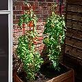 Tomaten-Rankgitter L, 2-teilig, Höhe 166 cm von Gärtner Pötschke - Du und dein Garten