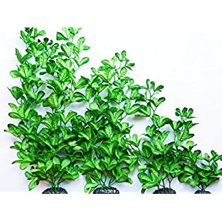 Aquarium plant (Silk) Glossy Greens Fish Tank Decoration 61He1l5khOL