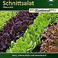 Schnittsalat Fitness Mix Salat vitaminreich von Chrestensen bei Du und dein Garten