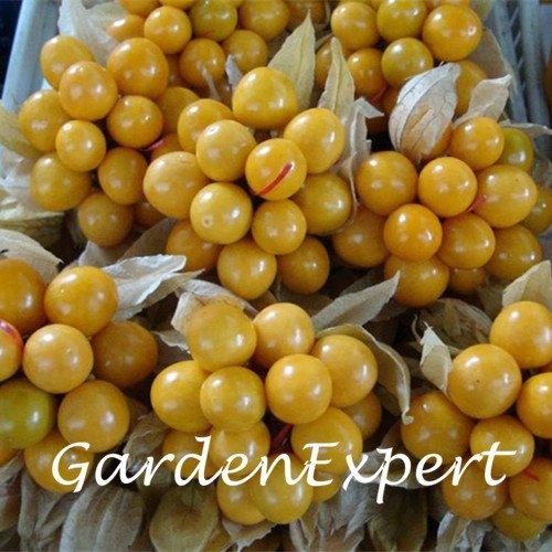 Semillas de oro 30pcs Berry Physalis Alkekengi deliciosa de la fruta china Lattern de Plantas de jardín Bonsai planta fácil de cultivar semillas de frutas