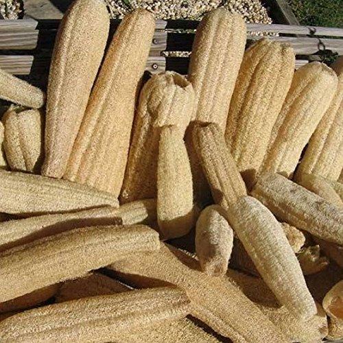 luffa-eponge-vegetale-10-graines
