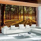 murando - Fototapete Wald 400x280 cm - Vlies Tapete - Moderne Wanddeko - Design Tapete - Wandtapete - Wand Dekoration - Wald Sonnenschein Bäume Natur Landschaft c-B-0027-a-c