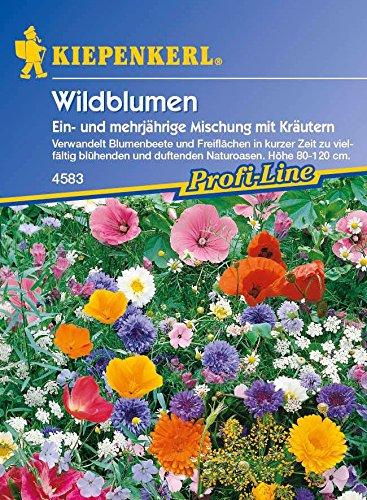 Kiepenkerl Wildblumen