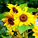 Hot Sale Spend Sunflower Seeds Organic H...