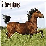 Arabians 2015 Wall Calendar by 2015 Calendars