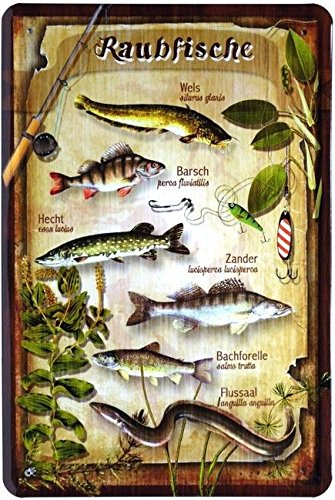 Blechschild 20x30 cm Raubfische angeln Hecht Zander Wels Barsch Metall Schild