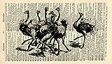 Ostriches Art Print - Bird Art Print - Vintage Art Print - Vintage Dictionary Art Print - Animal Wall Art - Wildlife Artwork - Gift - Nature Illustration - Wall Hanging - Book Print 690B