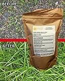 Best Grass Seeds - Hard Wearing Grass Seed. Fast Growing, Premium Grass Review