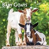 Baby Goats - Ziegenbabys 2019 - 18-Monatskalender (Wall-Kalender)