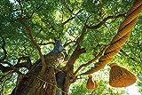 Das Wissen der Bäume: 59 Porträts der ältesten und legendärsten Bäume der Welt (Medizin, Esoterik, Spiritualität, Kulturgeschichte, Geheimnisse, Leben, weise) - Diane Cook