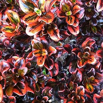 When I Grow Up . Gardener Babygrow in Emerald landscape gardening floral NEW