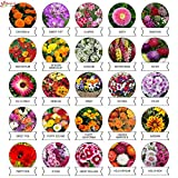 Kraft Seeds 25 Varieties of Flower Seeds Heirloom Seed For Your Garden 600+ seeds Beautiful Bloom This Season Genuine High Germination Seeds