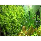 Musgo de pared Kit de malla (plantas no incluido) Depósito de decorar Bare vivir Acuario Planta acuática para Fish Tank