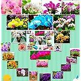 EN VENTA !!!! 100pcs Phalaenopsis semillas de semillas de orquídeas mariposa hermosa rara orquídea semillas de flores hogar y el jardín