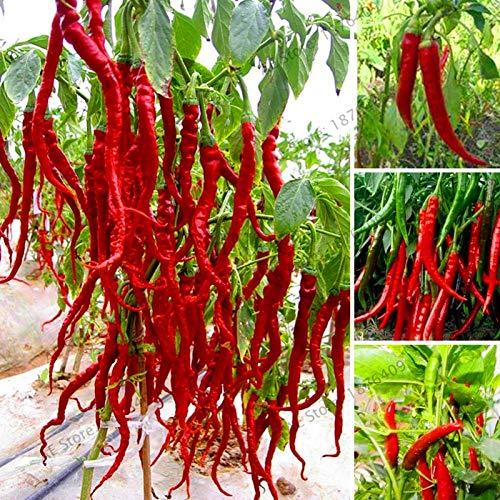Bloom Green Co. ! Big Sale 200 Stück Riesen Gewürze Spicy Red Chili-Peperoni-flores Pflanzen Topf Bonsai-Garten Hof Balkonpflanze plantas Neu: MIX - Spice Stack