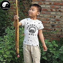 PLAT FIRM KEIM SEEDS: 100pcs: Buy Echte Klette Wurzeln Samen Pflanze Kräuter Große Klette Burdocks Niu Bang wachsen