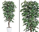 Künstlicher günstiger Ficusbaum Benjamini mit 180cm - Kunstpflanze künstliche Blumen Kunstblumen Blumensträuße künstlich, Seidenblumen oder Blumen aus Plastik Kunststoff </p> --> großes Kunstblumen Sortiment