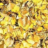 DeinDesign Sony Playstation 3 Folie Skin Sticker aus Vinyl-Folie Aufkleber Herbst Laub Blätter