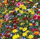 Adolenb Seeds House- Mélange de fleurs vivaces 'Mix' Papillons et abeilles '- Pré de fleurs, Graines de fleurs sauvages rares Mix Hardy Wildflowers & Herbs...