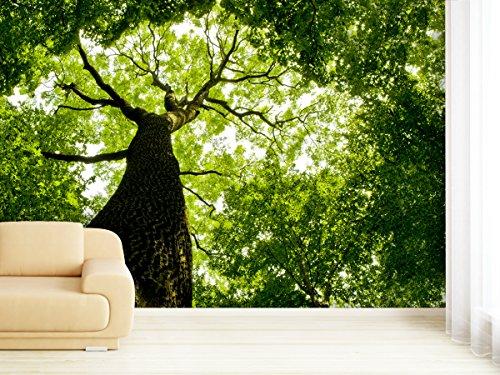 fototapete-sunlight-tree-in-verschiedenen-groessen-als-papiertapete-oder-vliestapete-waehlbar-pvc-fr