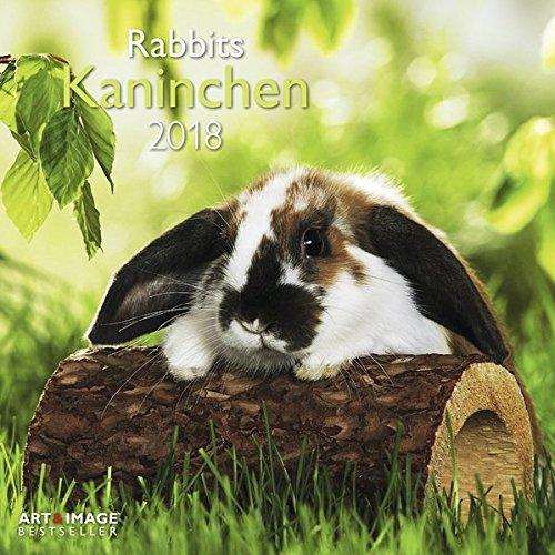 Kaninchen 2018 - Tierkalender, Kaninchen-Kalender, Hasenkalender, Haustierkalender  -  30 x 30 cm