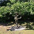 5 Meter NTA Rasenkante Beeteinfassung Beetumrandung schmal 140/1000 Mähkante Metall von NTA auf Du und dein Garten