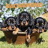 Dachshund Puppies - Dackelwelpen 2019 - 18-Monatskalender mit freier DogDays-App (Wall-Kalender)