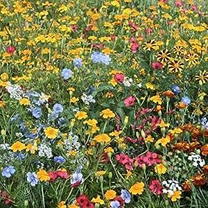 Mélange fleuri anti puçerons et autres ravageurs 2 grammes