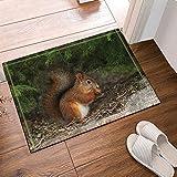 CUIMEISHEN Tier-Dekor-nettes Eichhörnchen unter Kiefer-Bad-Wolldecken-Rutschfeste Fußmatte-Boden-Eingänge Outdoor Indoor-Haustür-Matte scherzt Bad-Matte 40X60CM Badezimmer-Zusätze