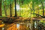 Artland Qualitätsbilder I Bild auf Leinwand LeinwandbilderGünter Albers Wald mit Bach Landschaften Wald Fotografie Braun D8SD