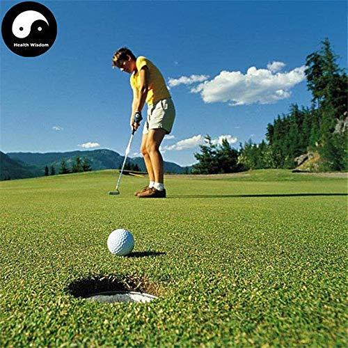 PLAT FIRM KEIM SEEDS: 500 Stück: Kaufen Evergreen Golf Rasensamen Pflanze Evergreen Garten Rasen Gras