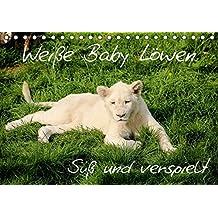 Weiße Baby Löwen - Süß und verspielt (Tischkalender 2017 DIN A5 quer): Erleben Sie faszinierende Fotoaufnahmen von seltenen weißen Babylöwen. (Monatskalender, 14 Seiten ) (CALVENDO Tiere)