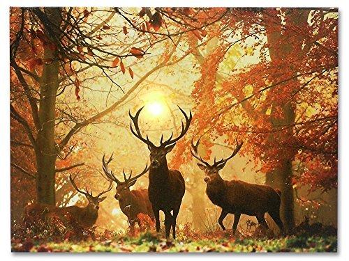 Rustikal Wildlife Dekor (Banberry Designs Leinwanddruck mit Hirschmotiv in englischer Sprache, mit LED-Beleuchtung, Weißer Schwanz im Herbstwald, 40,6 x 30,5 cm)