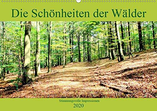 Herbst Blatt 2-licht (Die Schönheiten der Wälder - Stimmungsvolle Impressionen (Wandkalender 2020 DIN A2 quer): 1 Jahr in den Eifelwäldern unterwegs (Monatskalender, 14 Seiten ) (CALVENDO Natur))