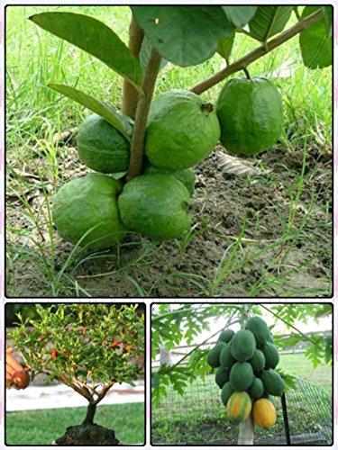 Buy Catterpillar Farm Dwarf Fruit Seeds Combo Pack Dwarf