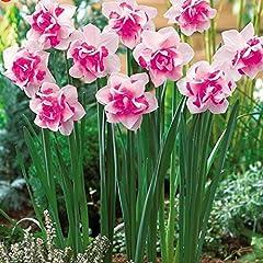 Idea Regalo - Bonsai Semi di piante acquatiche doppie petali rosa Narcisi seme per il giardino domestico di 100 particelle / semi di fiore Lot Sementes Red