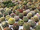 """800x""""Trichocereus Opuntia Saguaro"""" Semi Cactus Garden Mix"""