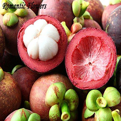 Lot de 2 sachets de semences de mangoustanier, riche en nutriments, roi des fruits tropicaux