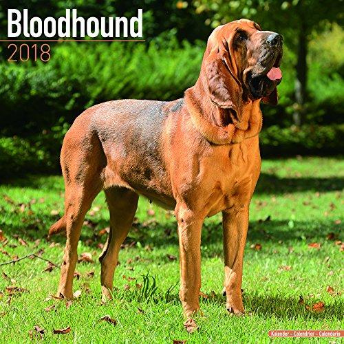 Kalender 2018 Bloodhound mit Weihnachtskarte