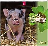 Glücksschweine: Original Stürtz-Kalender 2018 - Mittelformat-Kalender 33 x 31 cm -