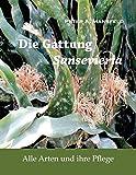 Die Gattung Sansevieria: Alle Arten und ihre Pflege - Peter A. Mansfeld