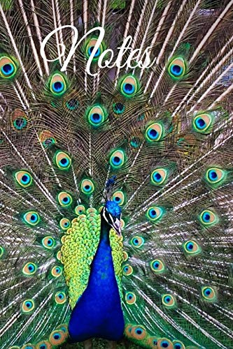 Peacock Tail Fan - Notes: Beautiful Colorful Majestic Peacock With