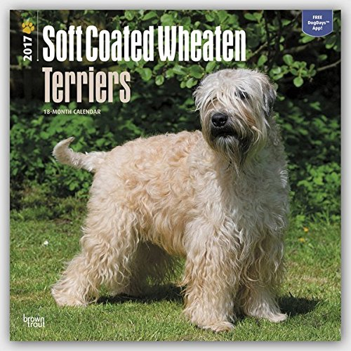 soft-coated-wheaten-terriers-wheaten-terrier-2017-18-monatskalender-mit-freier-dogdays-app-original-