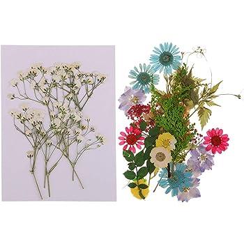 8-11 cm FLAMEER 12x Nat/ürliche Echte Getrocknete Gepresste Blumen DIY Gepr/ägte Fotorahmen Handytasche Material Gelb