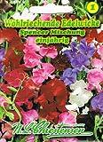 Wohlriechende Edelwicke Spencer Mischung 'Lathyrus odoratus' Wicke rankend