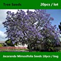 Shopmeeko ^^ Zarte & amp; Hübscher Jacaranda Mimosifolia ^^^^ 20pcs, seltener und kostbarer Blauer Jacaranda-Baum ^^^^, der Farn-Baum-Schwarz-Poui ^^^^ von Poniric bei Gartenmöbel von Du und Dein Garten
