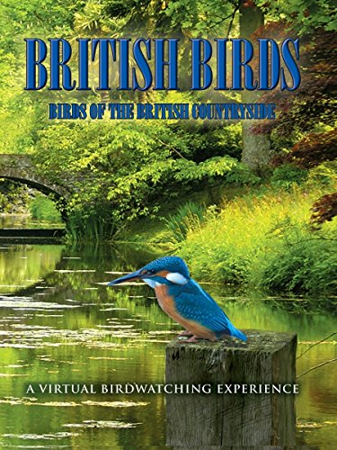 british-birds-birds-of-the-british-countryside