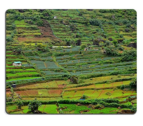 msd-natural-rubber-gaming-mousepad-image-id-28443703-tea-plantation-with-green-shrubs-in-highland-sr
